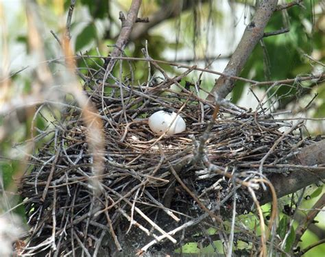 arunachala birds different types of birds nests part 1