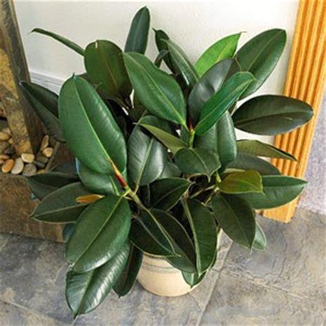 myinfotogo decor easy to care for plants