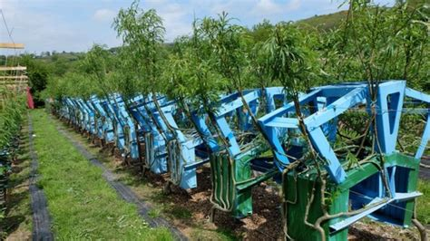 The man who grows fields full of tables and chairs bbc news