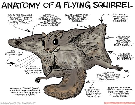 squirrel anatomy diagram image gallery squirrel anatomy