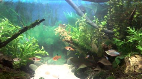 planted freshwater aquarium aquascaping