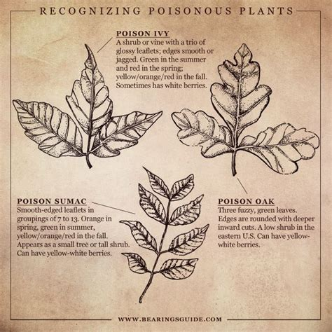 8 Ways To Identify Toxic by Today S Poisonous Plants Illustrated