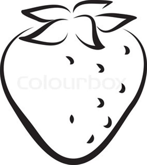 Strawberry Outline Drawing by Quot Berry Quot Vector Colourbox