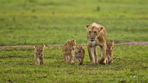 In Kenya kenya holidays 2018 world safaris
