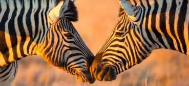 reiseblog afrika afrika blog