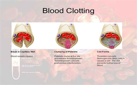 Blood Clots During Detox by Thromboplastin 10 Remarkable Features Of The Plasma