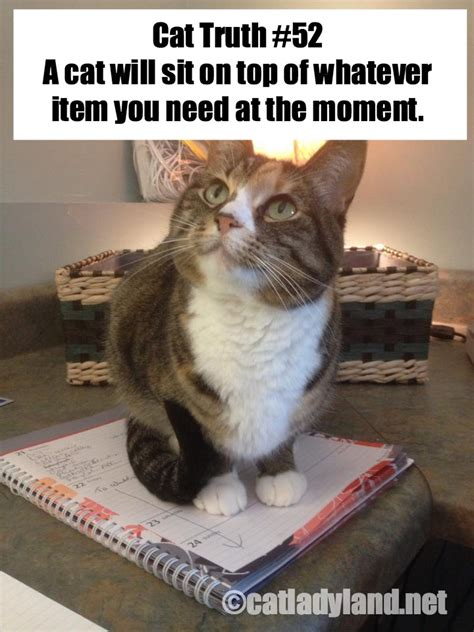 Cat Sitting Meme - catladyland cats are funny cat truths