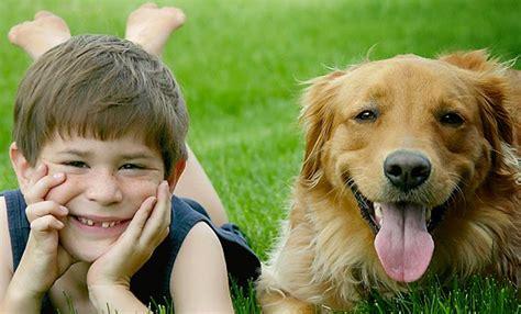 perros con personas estudios demuestran que los perros recuerdan lo que hacen