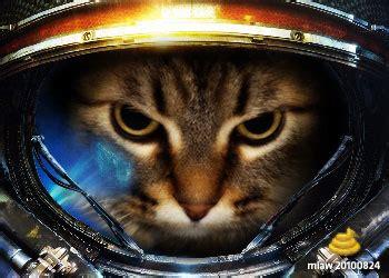 marine cat image cat lovers mod db