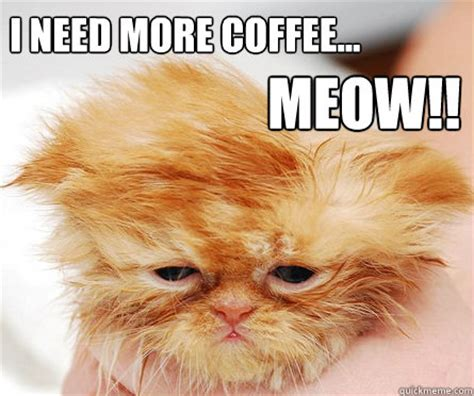 Need Coffee Meme - i need coffee memes memes