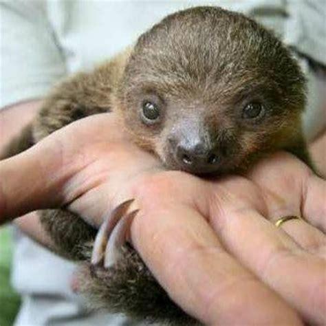 sloth center  zoological wildlife conservation