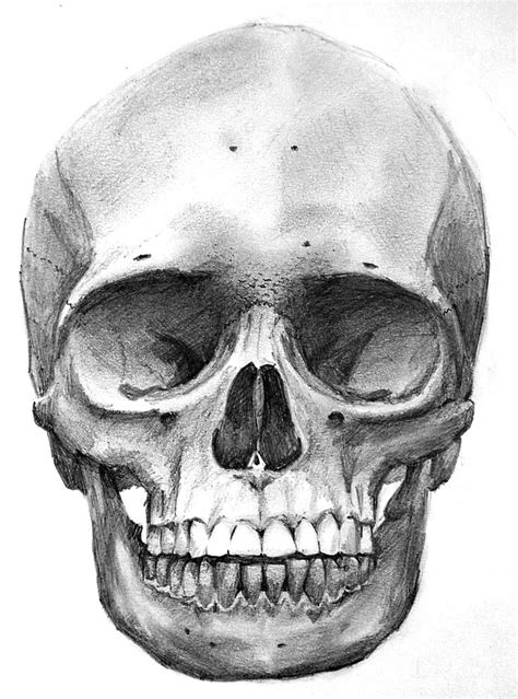 I Wana Learn To Do Drae That Well My Obbsession Skull On