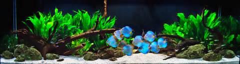 Aquarium Design Group custom aquarium design installation and service