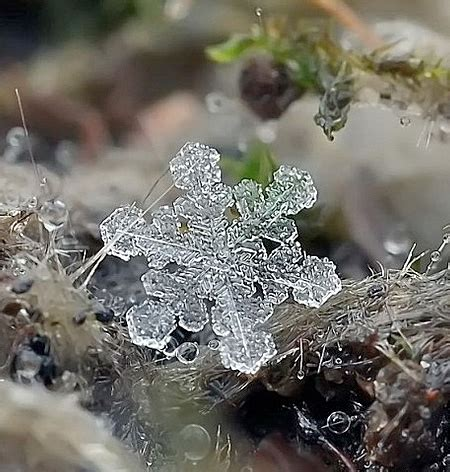 close up photos of snowflakes