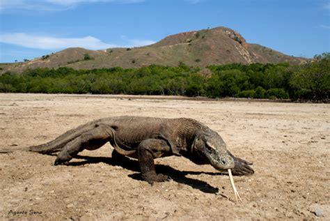 binatang langka     indonesia gogonesia