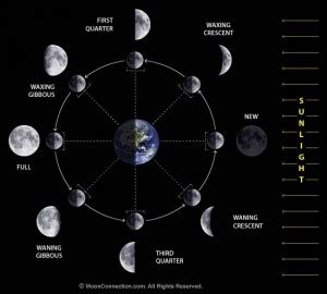 moon phase diagram how to use the daily moon sign to plan your activities