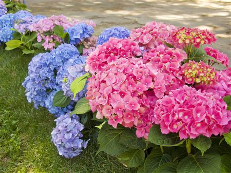 lights for small bushes 35 hydrangea garden ideas pictures