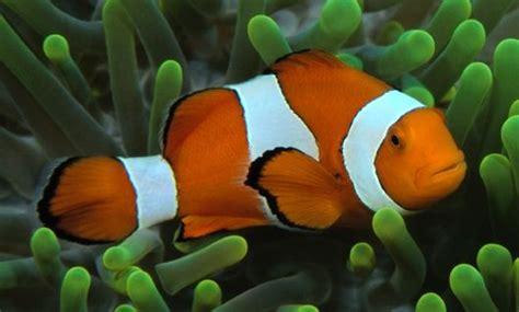 imagenes animales acuaticos fotos de animales acuaticos
