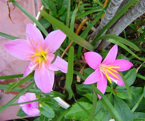 imagenes de flores naturales con sus nombres imagenes de flores con sus nombres