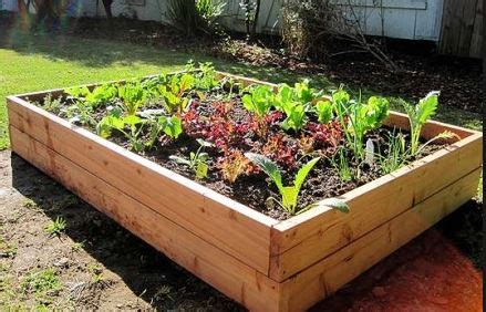 How To Make Raised Bed Garden Build Diy Raised Bed Gardens How To Make A Raised Vegetable Garden Bed