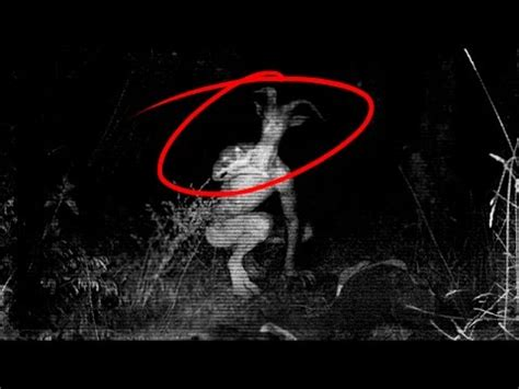 imagenes mitologicas gratis 10 criaturas m 237 ticas que en realidad existieron youtube