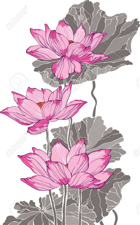 lotus flower drawing images 17 best ideas about lotus drawing on lotus