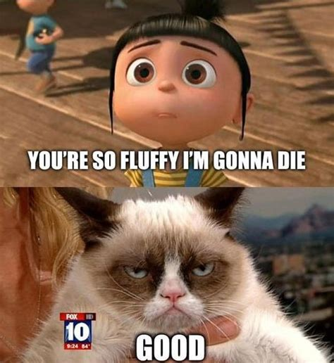 Grumpy Cat Meme Good - lol funny cat memes memes