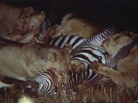 National Geographic Wildlife wildlife