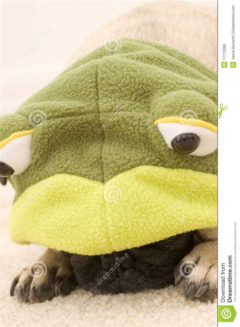 pug frog costume pug in frog costume stock photo image 11113260