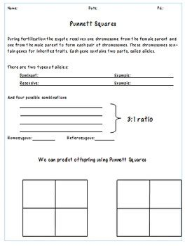 Punnett Square Template by Punnett Square Guided Notes And Worksheet Template Tpt