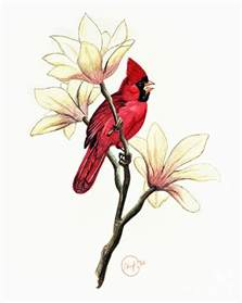 cardinal paintings and drawings pictures to pin on