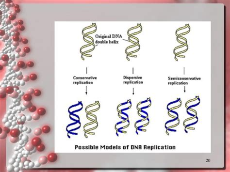 what acts as the template in dna replication gallery