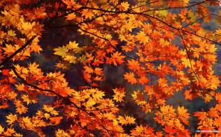 autumn tints beautiful fall leaves widescreen wallpapers 8273