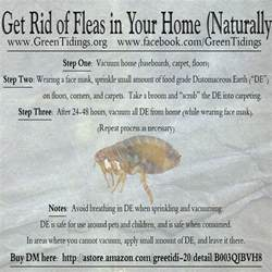 get rid fleas your house