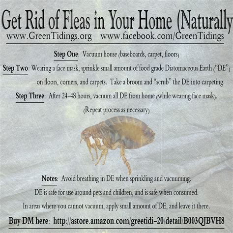 green tidings how to get rid of fleas in your home naturally