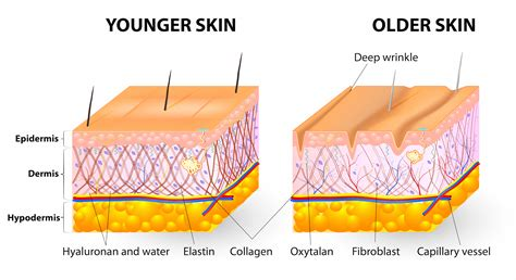 Collagen Skin the anti aging secret to wrinkles and more healthy habits