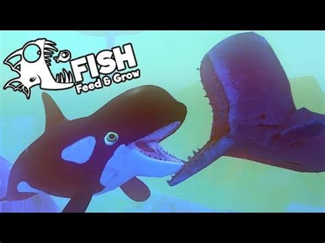 feed and grow fish gameplay german größter orca wal der
