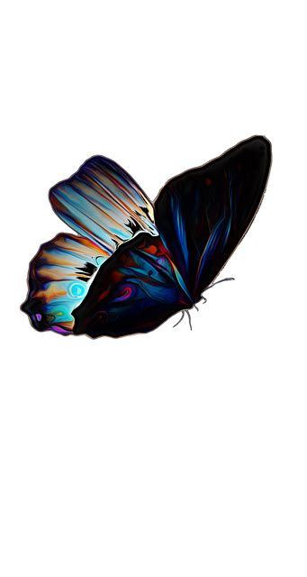 butterfly insect summer  image  pixabay
