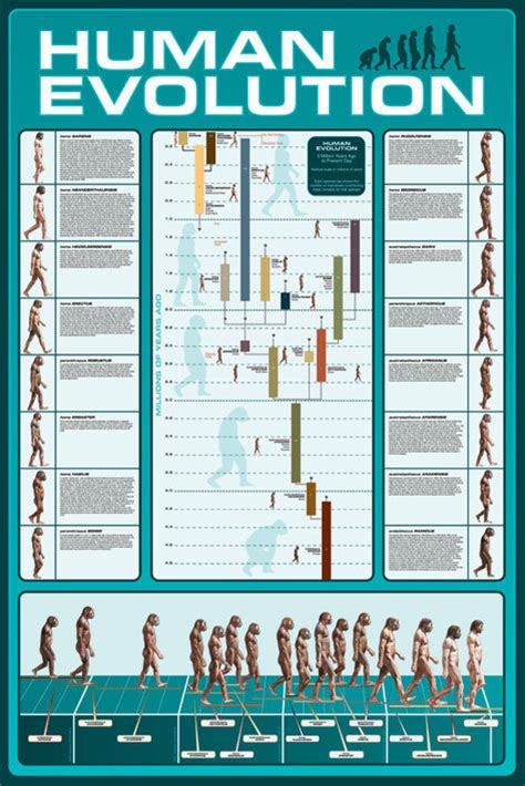 human evolution poster sold at europosters
