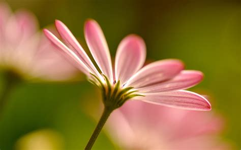 win with flower blurred wallpapers hd windows wallpapers