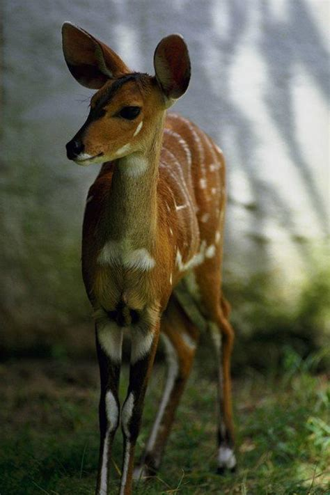 free wildlife pictures