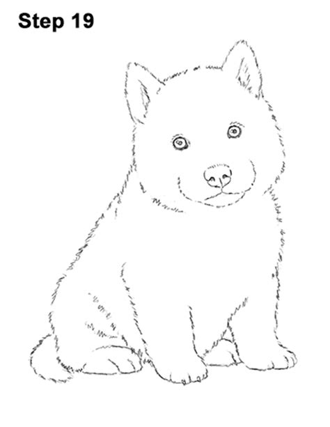 how to a husky puppy husky line drawing www pixshark images galleries with a bite