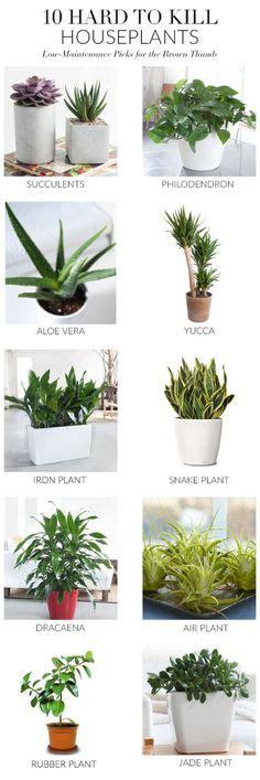 indoor gardens images indoor gardens plants