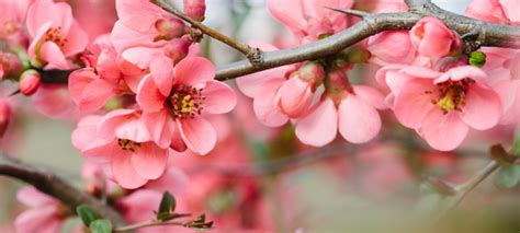 what is a spring related keywords suggestions for spring blossoms