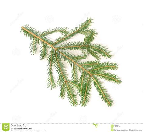 christmas tree branch stock image image 11737951