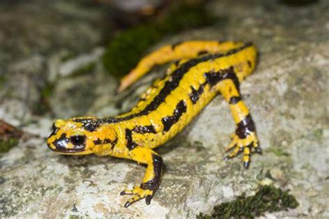 imagenes de animales vertebrados reptiles animales vertebrados peces anfibios reptiles aves y