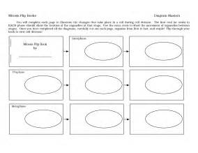 mitosis flip book template 28 mitosis flip book template gallery for gt