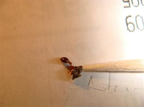 Carpenter Ants Bathroom by Dirt In Wall Or Carpenter Ants Doityourself