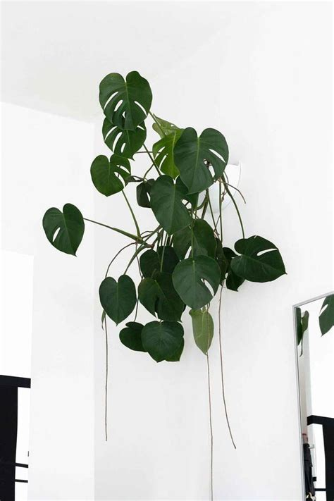 super  light houseplants flowers indoor plants