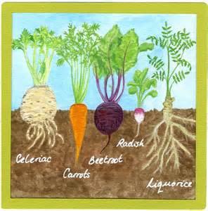 cassie liversidge grow your own ingredients roots we eat